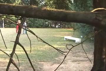 Public fucking in a park